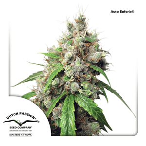 Dutch Passion / AUTO 3 Pack / Auto Euforia
